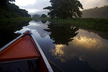 Boating and observing fauna and flora in the everglade area of Kaw, French Guiana, South America