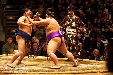 Sumo wrestling competition at the Kokugikan stadium, Tokyo, Japan, Asia