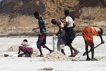 Salt caravan in Djibouti, going from Assal Lake to Ethiopian mountains, Djibouti, Africa