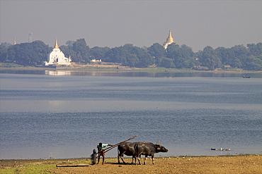 View of the U Bein lake from the teak bridge in Mandalay, Myanmar (Burma), Asia