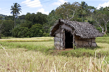 Shelter woven from leaves used by farmers at night as a base to frighten away marauding animals plundering the crops, Sri Lanka, Asia