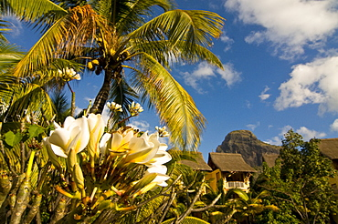 Blooming flower in the garden of Beachcomber Le Paradis, near Mont Brabant, Mauritius, Indian Ocean, Africa