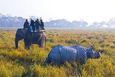 Tourists on an elephant watching an Indian Rhinoceros (Rhinoceros unicornis), Kaziranga National Park, UNESCO World Heritage Site, Assam, Northeast India, India, Asia