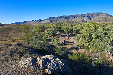 Flinders Ranges National Park, South Australia, Australia, Pacific