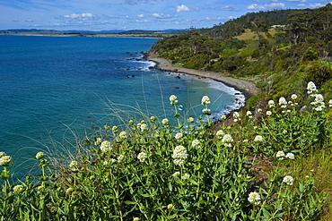 Tasmania, Australia, Pacific