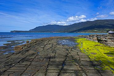 Tessellated Pavement, Tasman Peninsula, Tasmania, Australia, Pacific