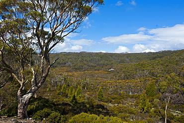 Mount Field National Park, Tasmania, Australia, Pacific