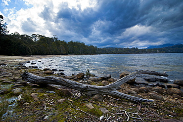 Lake St. Claire, Tasmania, Australia, Pacific
