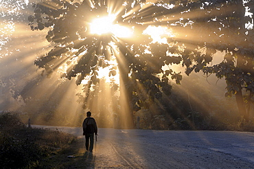 Man walking along a street with sun rays shining through a tree, Highlands, Myanmar (Burma)