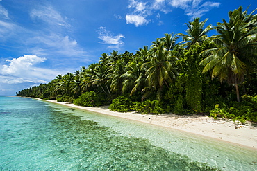 Paradise white sand beach and turquoise water on Ant Atoll, Pohnpei, Micronesia, Pacific
