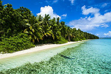 Paradise white sand beach in turquoise water on Ant Atoll, Pohnpei, Micronesia, Pacific