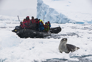 Tourists in a Zodiac looking at a leopard seal (Hydrurga leptonyx), Enterprise Island, Antarctica, Polar Regions