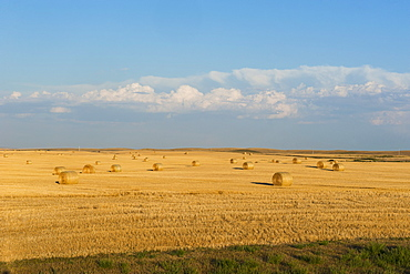 Bales of straw on a field, Wyoming, United States of America, North America