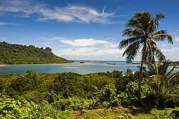 Lonely palm tree, Pohnpei (Ponape), Federated States of Micronesia, Caroline Islands, Central Pacific, Pacific
