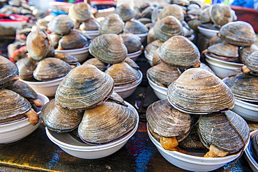 Mussels for sale at the fish market in Busan, South Korea, Asia