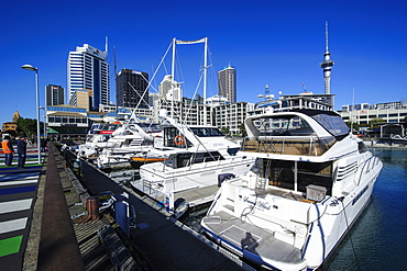 Harbour of Auckland, North Island, New Zealand, Pacific