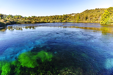 Te Waikoropupu springs declared as clearest fresh water springs in the world, Takaka, Golden Bay, Tasman Region, South Island, New Zealand, Pacific
