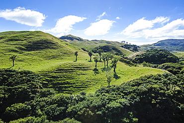 Beautiful green scenery behind Wharariki Beach, South Island, New Zealand, Pacific