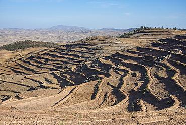 Terraced fields, Filfil, Eritrea, Africa