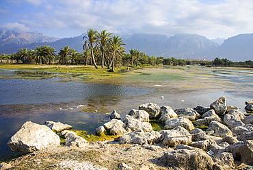 Swamps outside of Hadibo, capital of the island of Socotra, UNESCO World Heritage Site, Yemen, Middle East