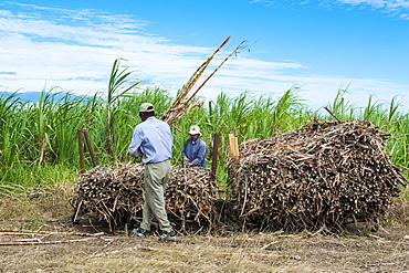 Sugar cane train, Coral Coast, Fiji, South Pacific, Pacific
