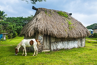 Traditional house on the Coral Coast, Viti Levu, Fiji, South Pacific, Pacific