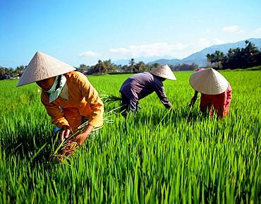 Nha Thang, Vietnam