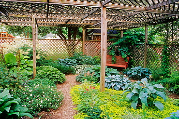 Lath house creates shade garden...