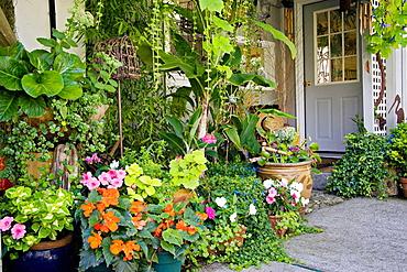 Begonias, Geraniums, Impatiens in container garden under protected entryway (Begonia cv.; Pelargonium cv.; Impatiens walleriana), Hansen, Ferndale, WA.