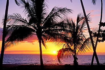 Sunset through silhouetted palm trees at Hapuna Beach, Kohala Coast, The Big Island, Hawaii