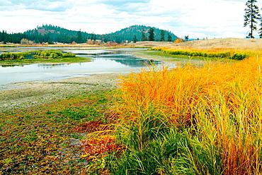 Marsh in fall, Kamloops, British Columbia, Canada