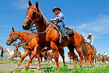 Horses and riders, Cattle drive, Kamloops, British Columbia, Canada
