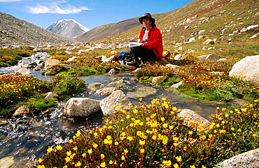 Catching up on diary, Relaxing beside stream with buttercups, Tavan Bogd, Altai mountains, Western Mongolia