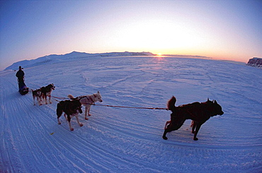 Husky team on fiord spring Longyearbyen Spitsbergen Island Svalbard Norwegian Arctic