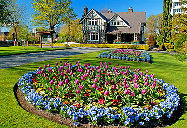 Spring flowers in Hagley Park Curators House restaurant behind Christchurch New Zealand