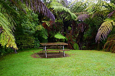 Picnic table at Pirongia Forest Park, Waikato, North Island, New Zealand