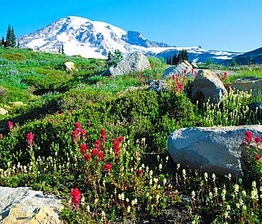 Paradise Valley, Mount Rainier National Park, Washington, USA