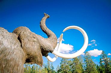Wooly mammoth (Mammuthus primigenius) Yukon Beringia Interpretive Centre, Whitehorse, Yukon, Canada