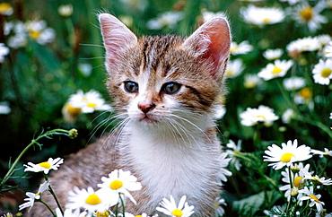Kitten in meadow