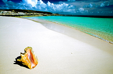 Horizontal image of an idyllic beach scenic with queen conch shell, Shot before a storm on Gibbs Cay, Grand Turk, Turks and Caicos Islands