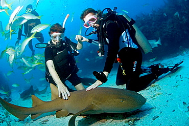 two woman divers settle to the sand and touch a passing nursh shark, Ambergris Caye, Belize, Caribbean Sea
