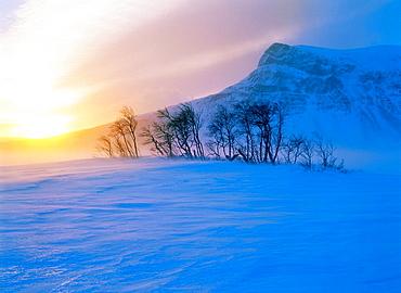 Mountain birches in snowstorm, Tjakkeli mountain in background, Sarek National Park, Lapland, Sweden