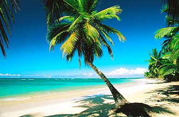 Beach, Samana Peninsula, Dominican Republic