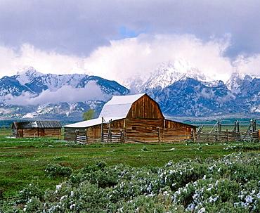 Historic Mormon barn and the Tetons after late spring snowfall, Grand Teton National Park, Teton County, Wyoming, USA