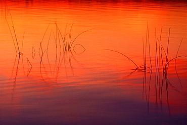Sunset light on Lake Mindemoya with bulrush silhouettes, Manitoulin Island, Ontario, Canada