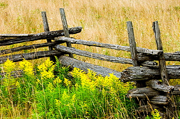 Cedar split rail fence and goldenrods in late summer, Manitoulin Island, Ontario