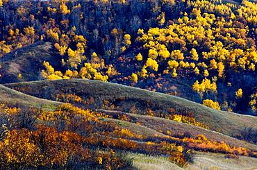 Qu'Appelle Valley landforms with autumn aspens and shrubs, Saskatchewan