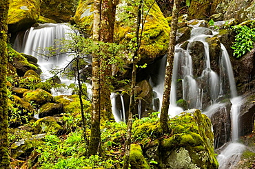 Spring cascade tributary of Middle Prong of the Little River, Great Smoky Mountains National Park, Tennessee, Appalachian, USA