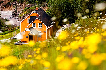 Maison Blanchet (Historic house) and roadside wildflowers along Gulf of St, Lawrence, Gaspesie, Quebec, Canada