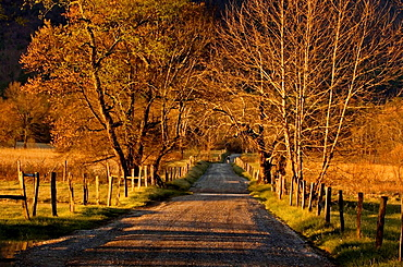 Sparks Lane at dawn in Cades Cove, Appalachian, Great Smoky Mountains National Park, Tennessee, USA
